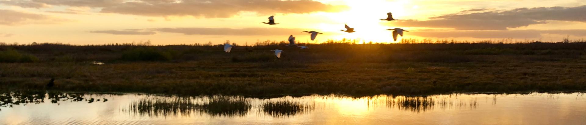 florida bayou